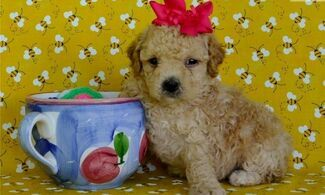 Pets & Livestock For Sale in UK | Loot